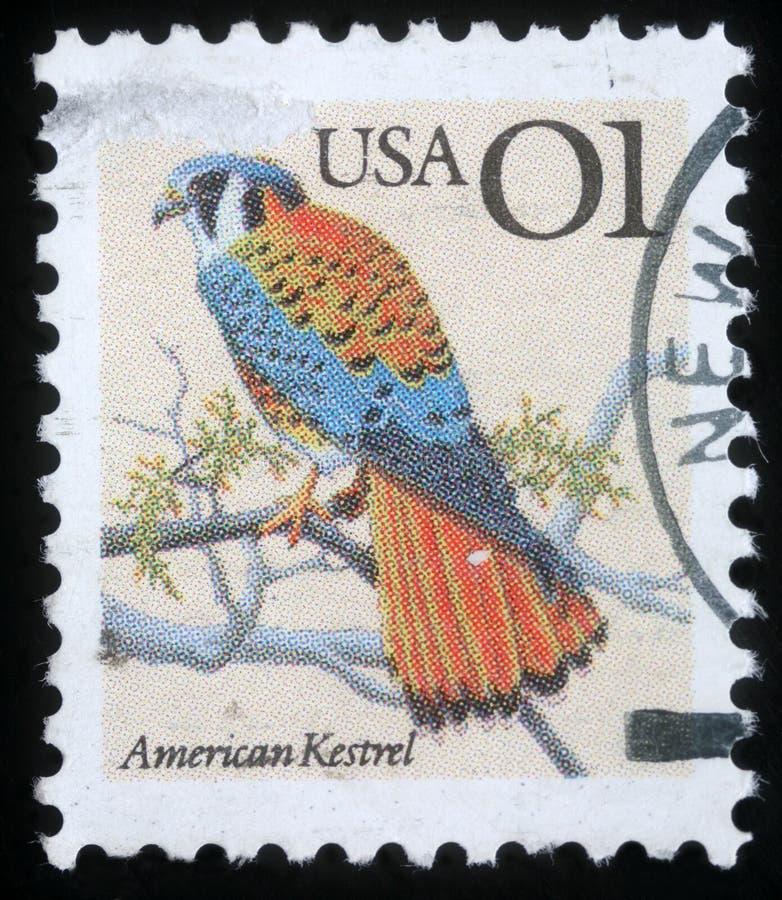 Znaczek drukujący w usa pokazuje Amerykańskiego Kestrel - Falco sparverius fotografia royalty free