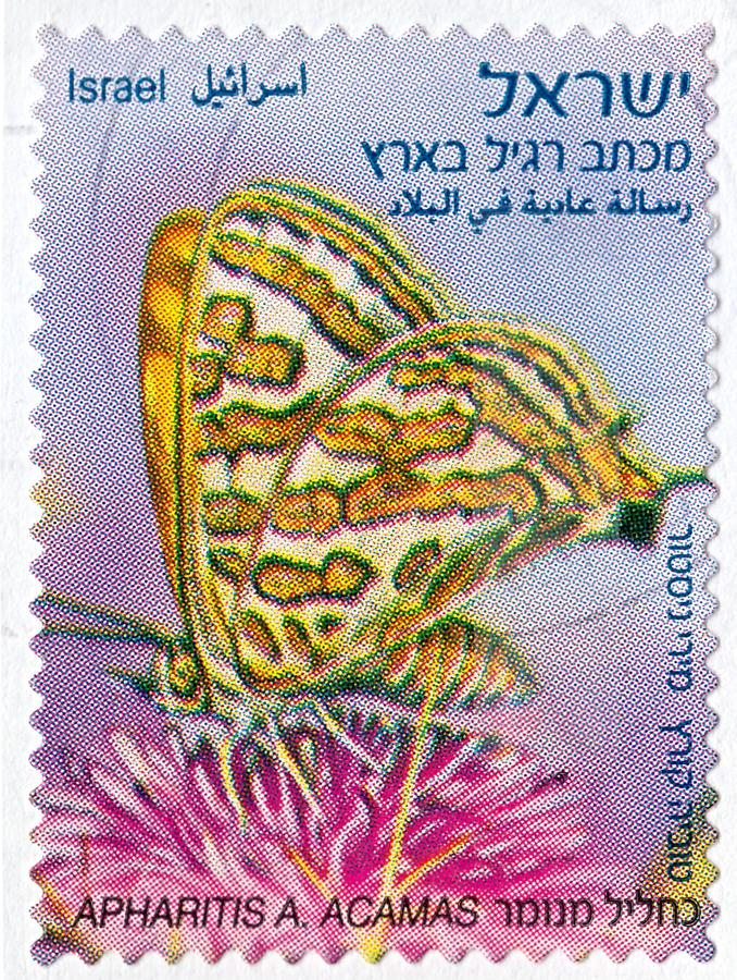 Znaczek pocztowy drukujący w Izrael Pokazuje motyliego Apharitis utrzymanie w Izrael zdjęcie royalty free
