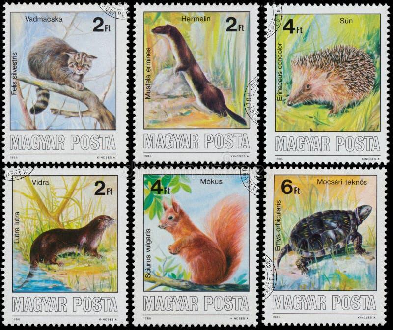 Znaczki drukujący w Węgry przedstawienia Ochraniających zwierzętach fotografia stock