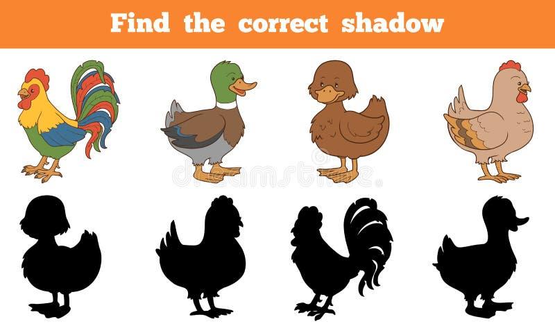 Znajduje poprawnego cień: zwierzęta gospodarskie (kurczak i kaczki) ilustracji