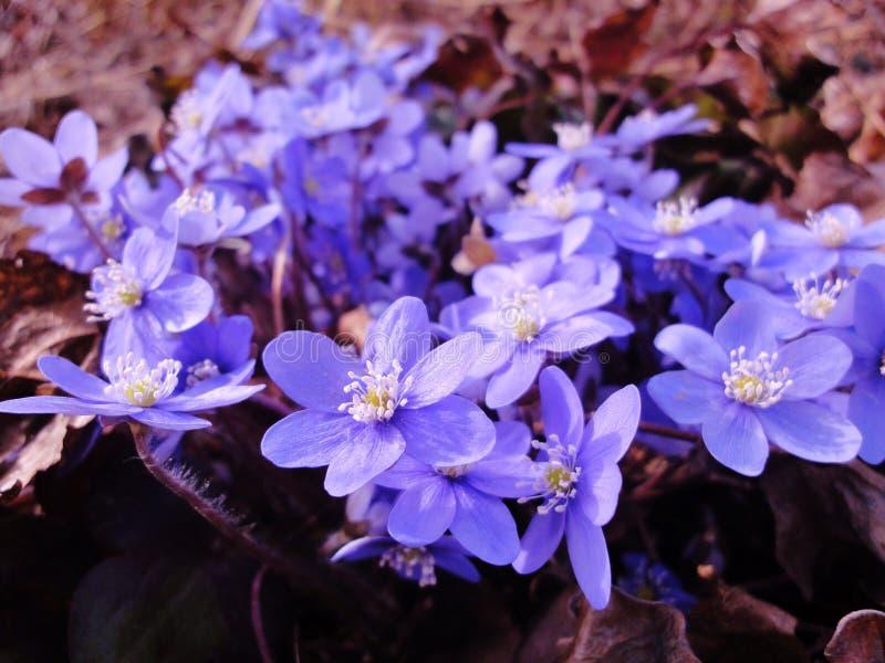 Znaki wiosna fotografia stock