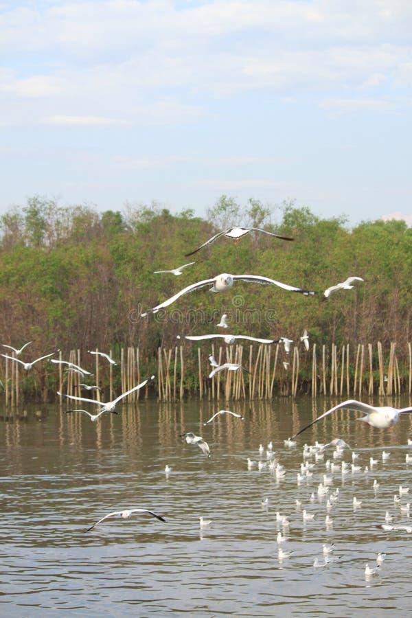 Znaleziska jedzenie od grupy białego seagull tła ostrości miękka komarnica obrazy royalty free