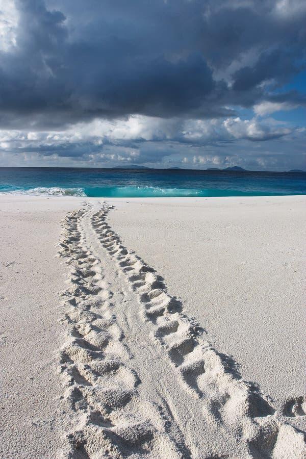 Download Znikająca przyrody zdjęcie stock. Obraz złożonej z seychelles - 49518