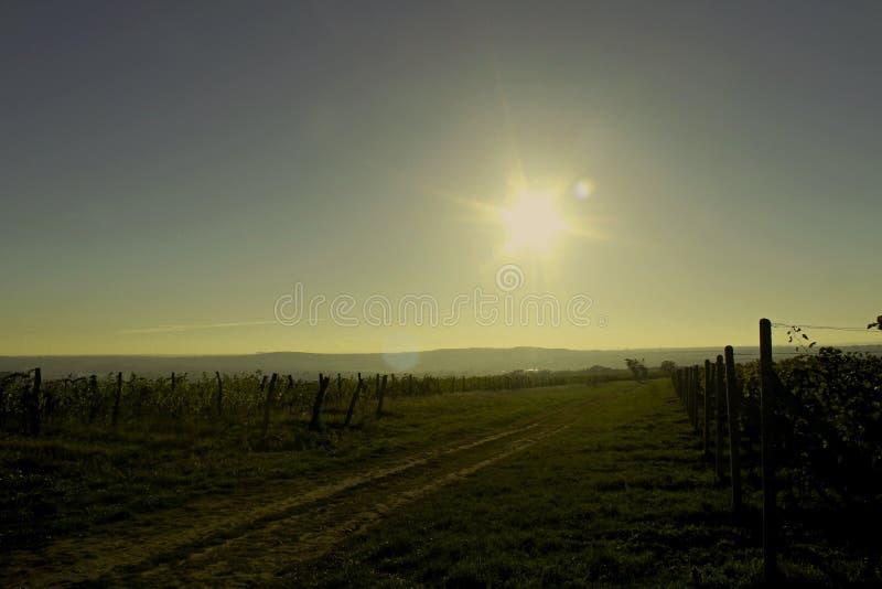 Znojmo - виноградник стоковые изображения rf
