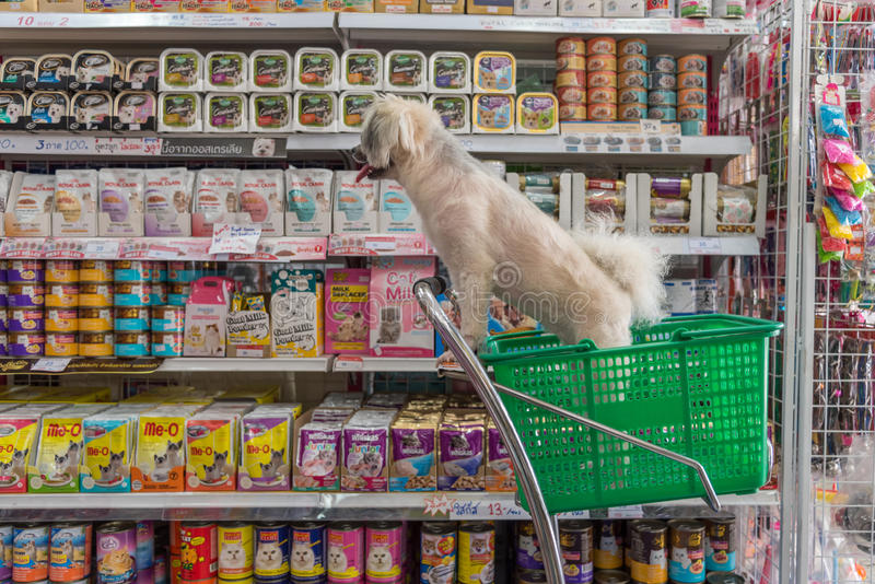 Zo leuke de hond wacht een huisdiereneigenaar bij dierenwinkel stock afbeelding