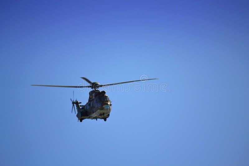 Zoals-532 AL Cougar royalty-vrije stock fotografie