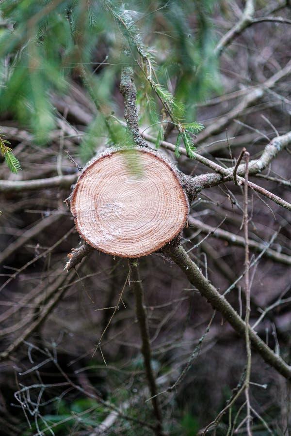 zobaczył rżniętego drzewnego bagażnika z rok pierścionkami i zobaczył pył obrazy royalty free