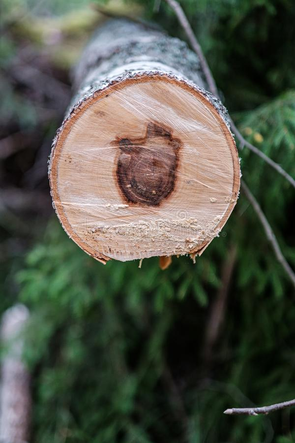 zobaczył rżniętego drzewnego bagażnika z rok pierścionkami i zobaczył pył obraz stock