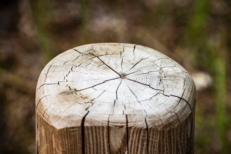 zobaczył rżniętego drzewnego bagażnika z rok pierścionkami i zobaczył pył zdjęcia stock