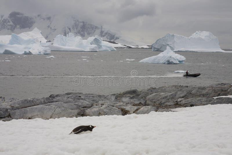 Zodiac exploring the ocean, Antarctica. stock photos