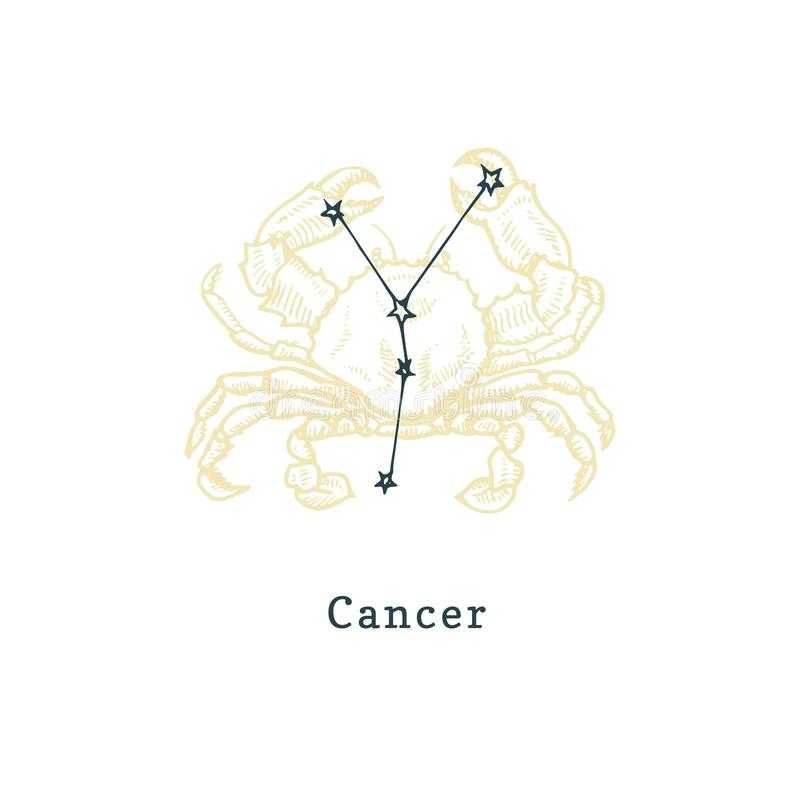 Zodiacal constellation of Cancer on background of hand drawn symbol in engraving style.Vector illustration of sign Crab. Zodiacal constellation of Cancer on vector illustration