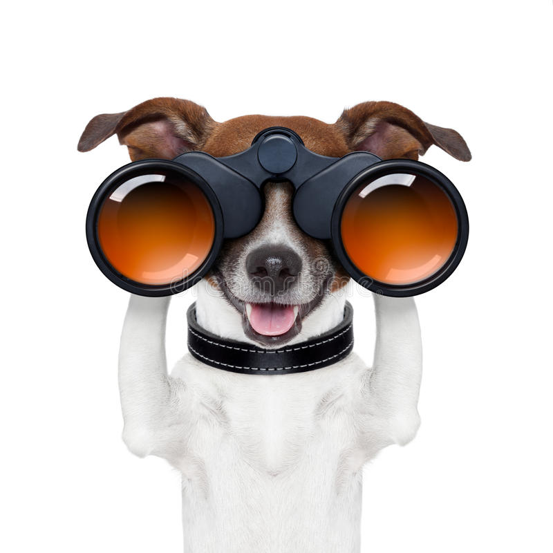 Zoeken die van verrekijkers waarnemend hond kijkt royalty-vrije stock foto's