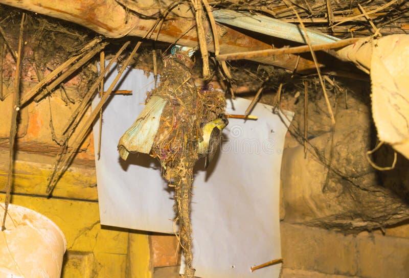 Zoemende vogel die haar babys in het nest voeden stock foto