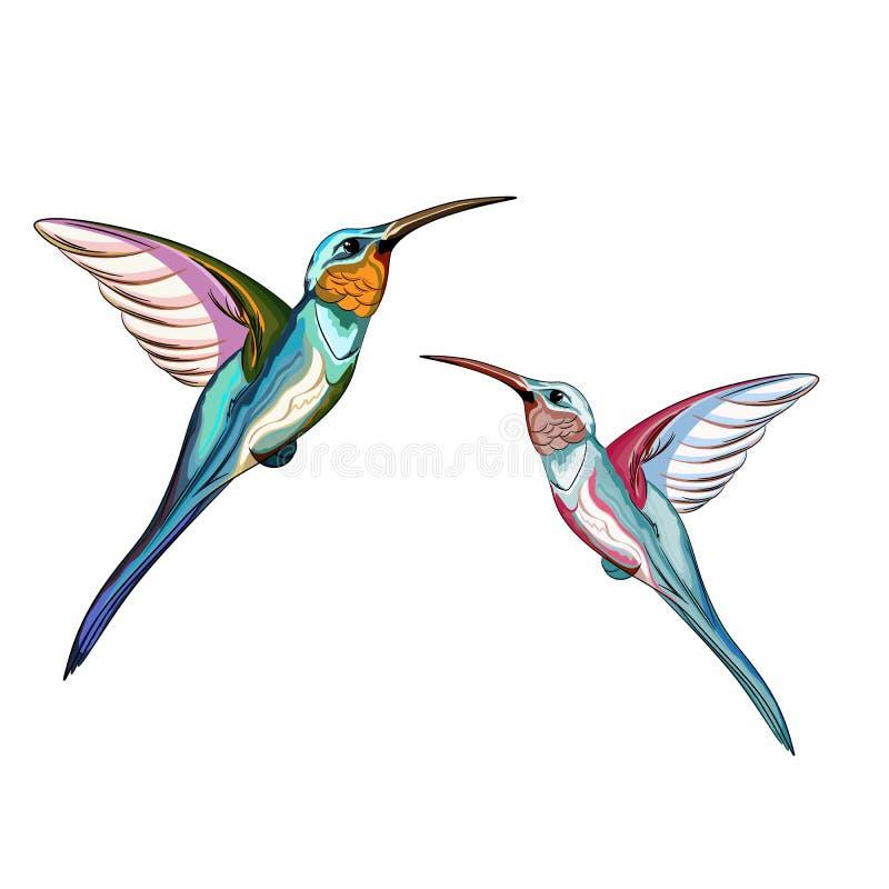Zoemende Vogels Reeks van exotische tropische zoemende vogel twee stock illustratie
