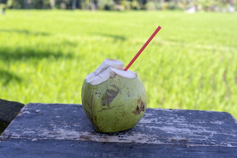 Zoet groen kokosnotenwater met het drinken stro op houten raad Kokosnoten tropisch fruit in eiland Bali dichtbij rijstterras, Ind royalty-vrije stock foto