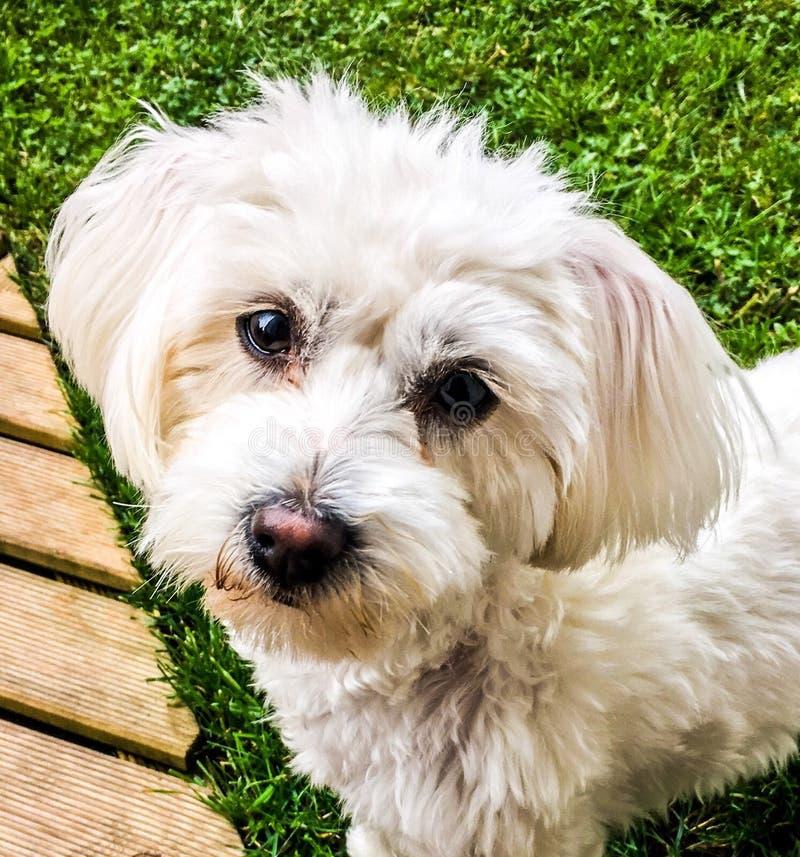 Zoet hondportret royalty-vrije stock foto