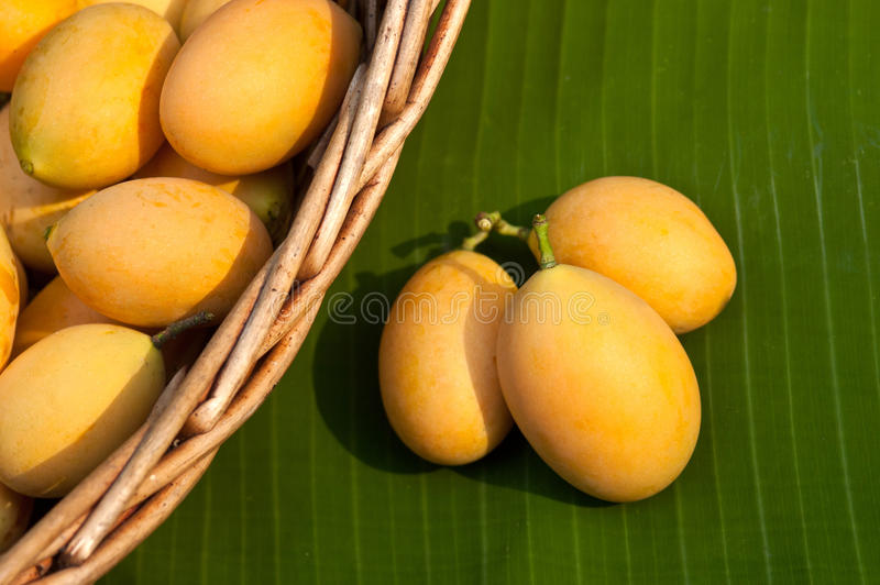 zoet Marian pruim Thais fruit (Mayongchid Maprang Marian Plum en royalty-vrije stock foto