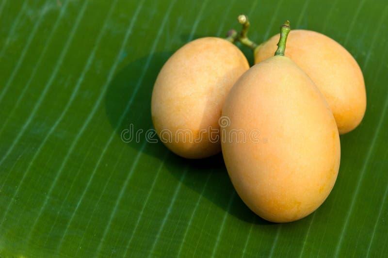 zoet Marian pruim Thais fruit (Mayongchid Maprang Marian Plum en royalty-vrije stock afbeelding