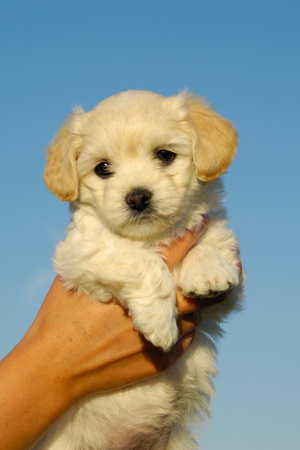 Zoet puppy stock afbeelding