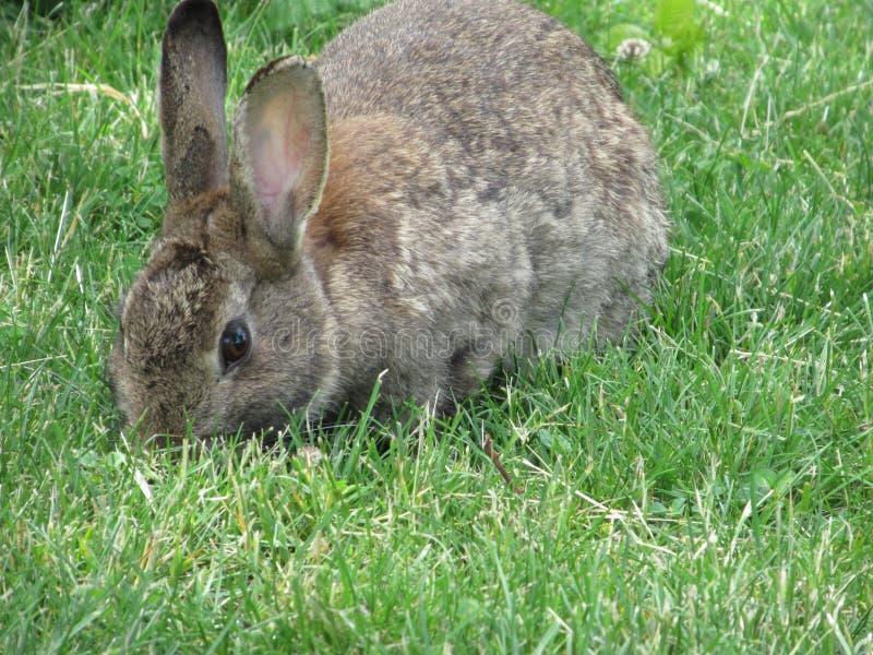 Zoete aanbiddelijke dichte omhooggaand van het konijntjeskonijn in Jericho Beach Park, de Zomer van 2018 royalty-vrije stock fotografie