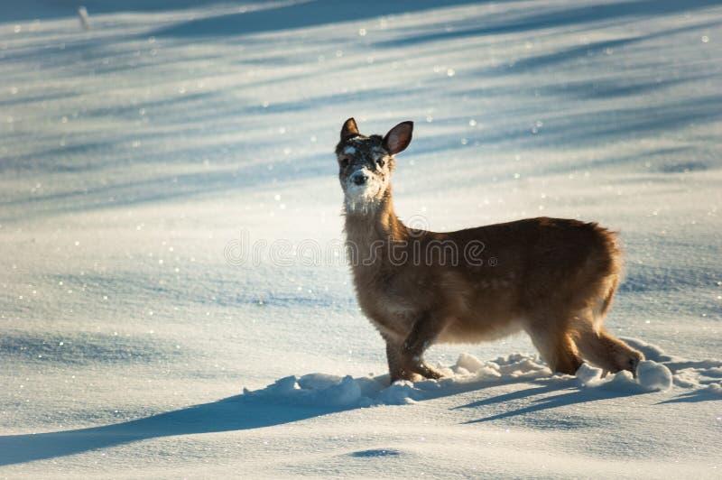 Zoete babyherten in sneeuw stock foto
