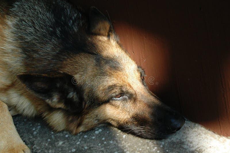 Zoete hond stock afbeeldingen