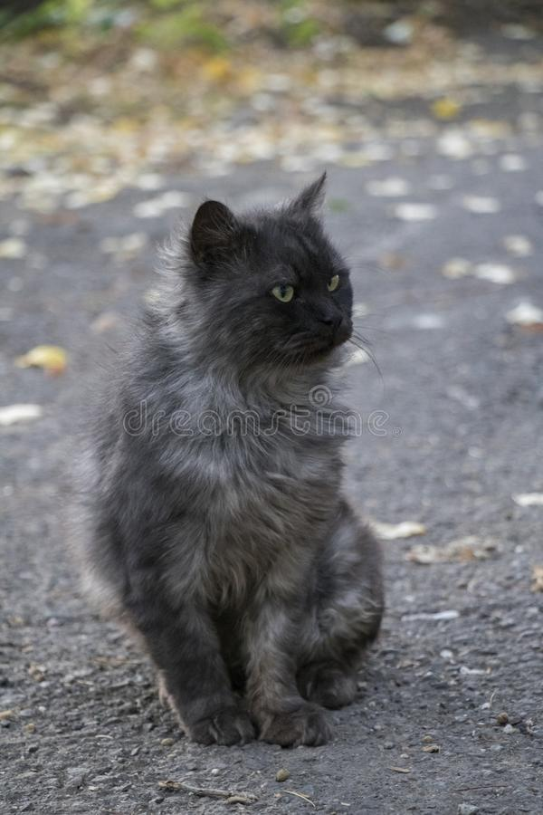 Zoete hongerige kat stock foto