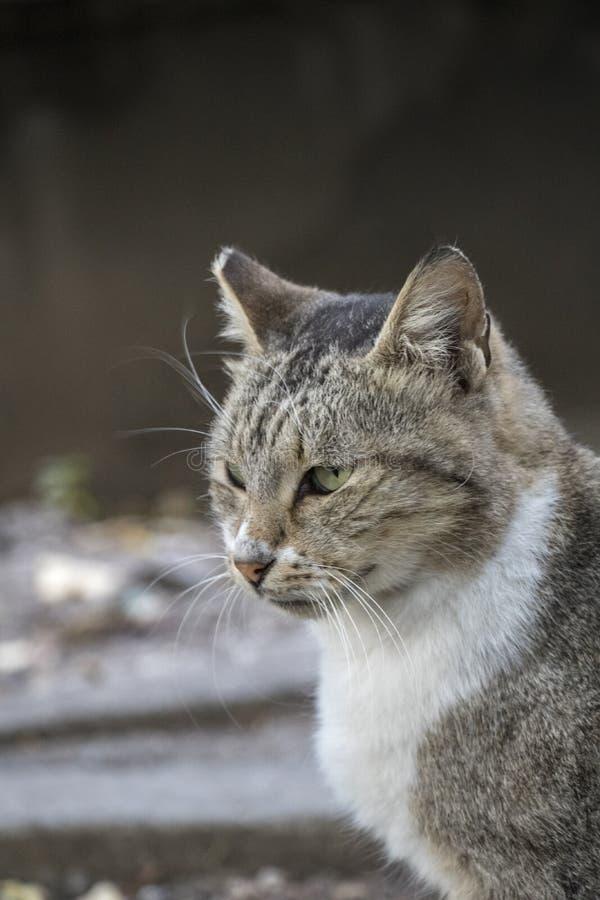 Zoete hongerige kat stock afbeelding