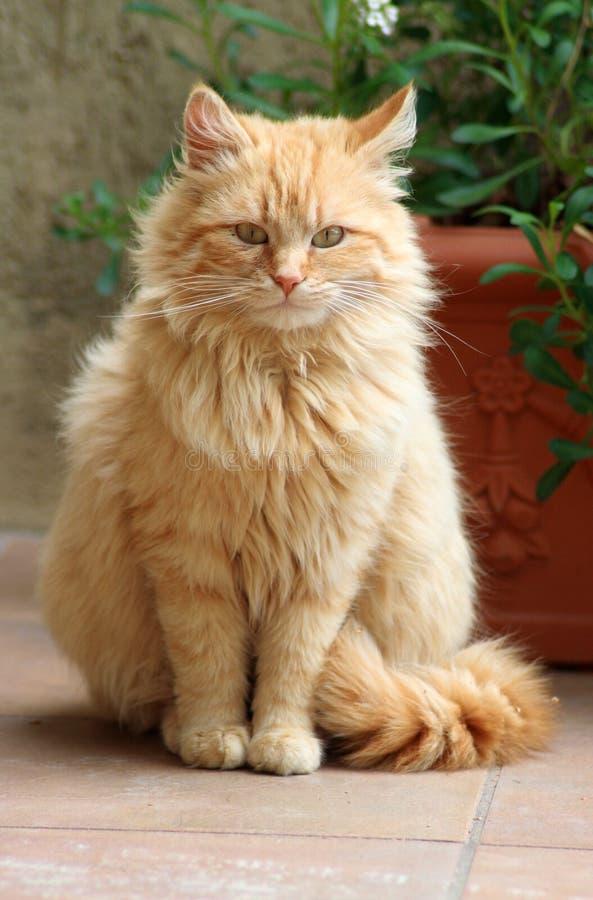 Zoete kat stock afbeeldingen