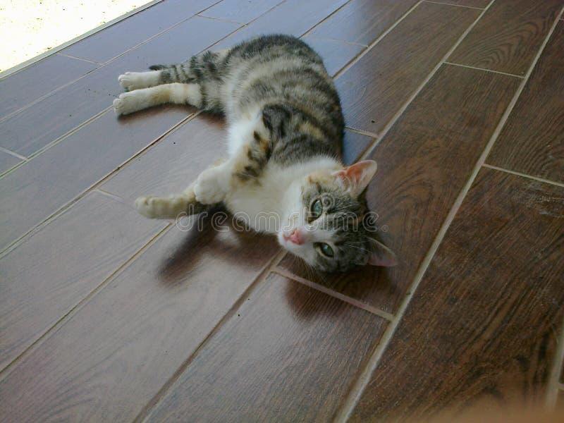 Zoete kat stock afbeelding