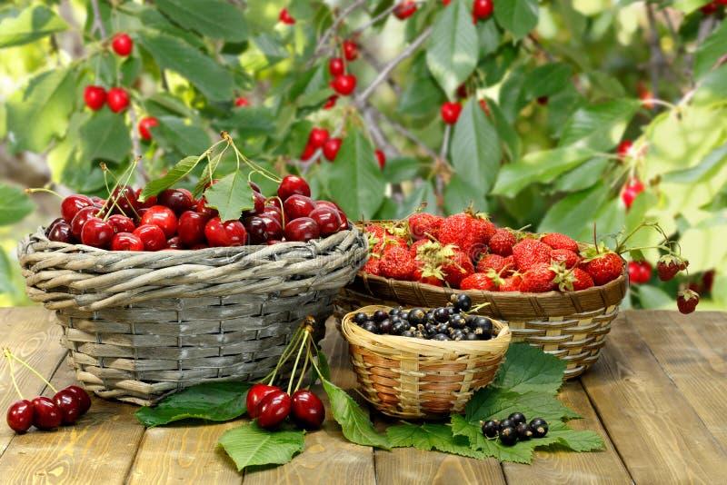 Zoete kers, aardbei en zwarte bes in rieten manden op houten bureau in tuin royalty-vrije stock fotografie