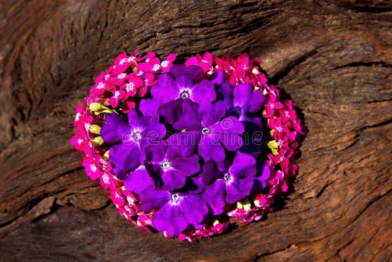 Zoete kleine bloesems in roze en sering op hout stock foto