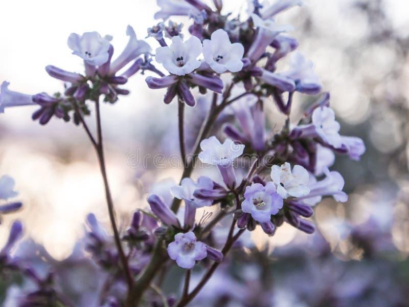 Zoete kleine purpere bloemen royalty-vrije stock fotografie