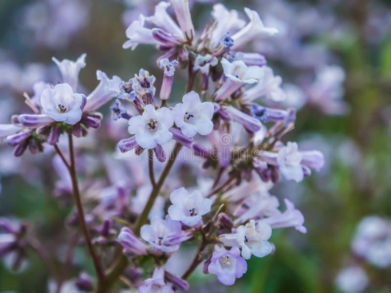 Zoete kleine purpere bloemen stock afbeeldingen