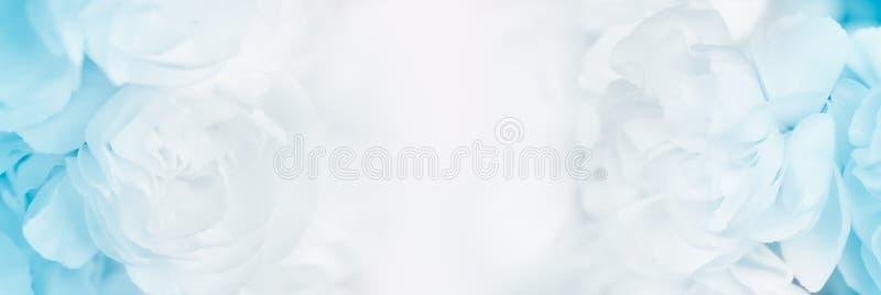 Zoete kleurenanjer op de achtergrond van de zachte en onduidelijk beeldstijl royalty-vrije stock foto