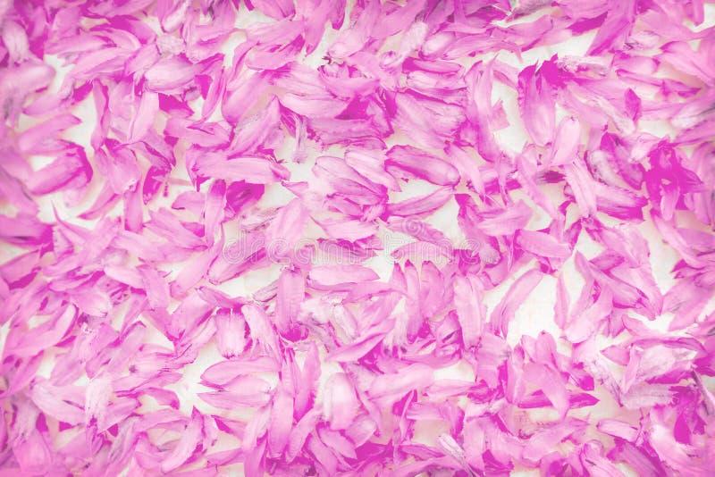 Zoete kleurrijke roze het patroontextuur van bloemenbloemblaadjes voor achtergrond royalty-vrije stock foto's