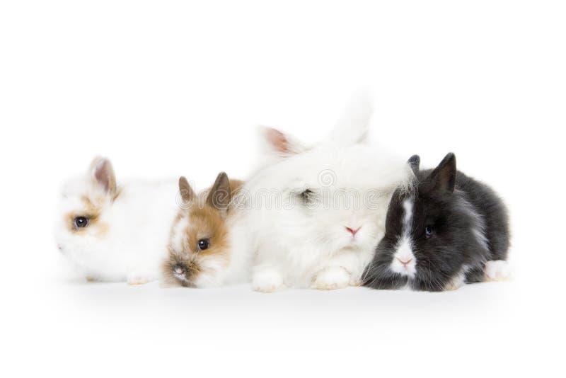 Zoete konijntjes stock fotografie