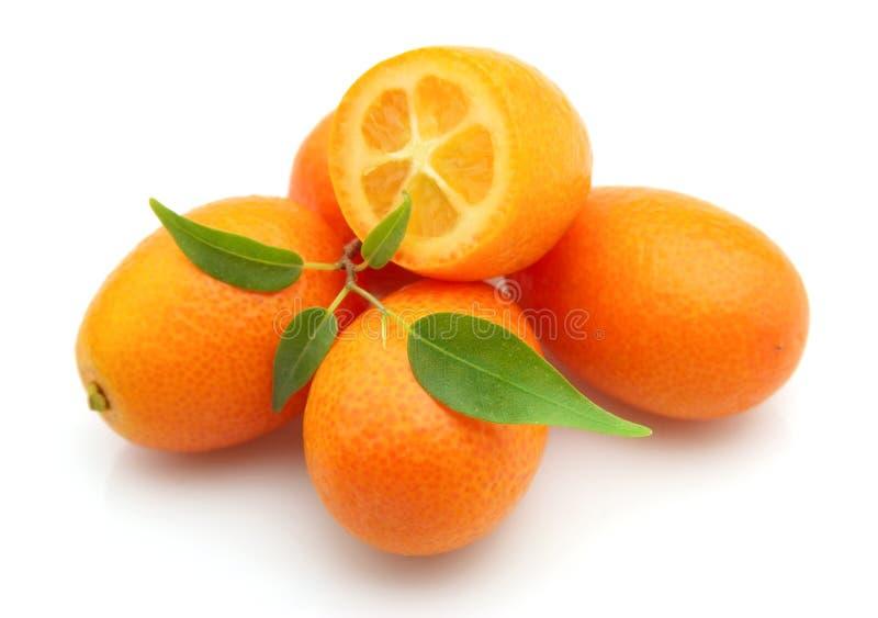 Zoete kumquat stock foto