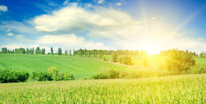 Zoete maïsgebied en heldere zonsopgang Brede foto stock fotografie