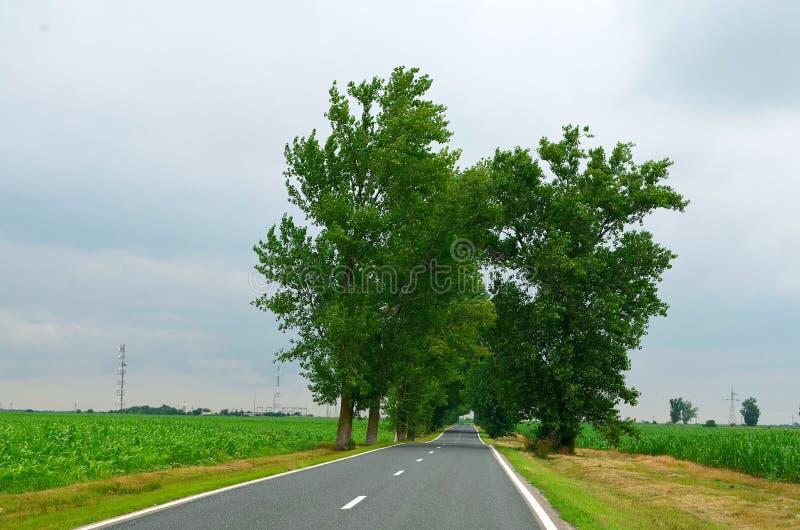 Zoete maïsgebied met Groene Bomen onder de weg stock afbeelding