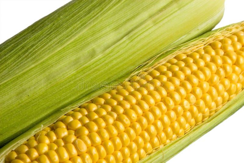 Zoete maïskolven stock afbeelding