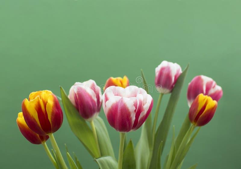 Zoete tulpen op groene achtergrond stock afbeeldingen