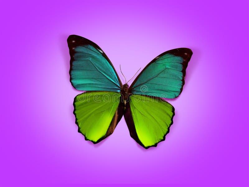 Zoete vlinder vector illustratie