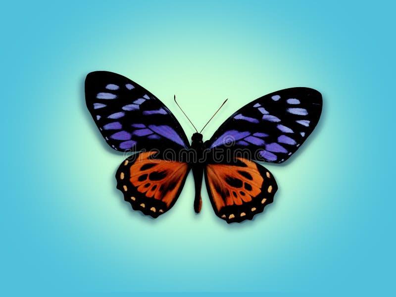 Zoete vlinder royalty-vrije stock fotografie