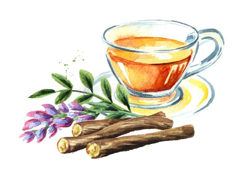 Zoethoutthee, bloem en wortel, concept gezonde drank Waterverfhand getrokken die illustratie op witte achtergrond wordt geïsoleer vector illustratie