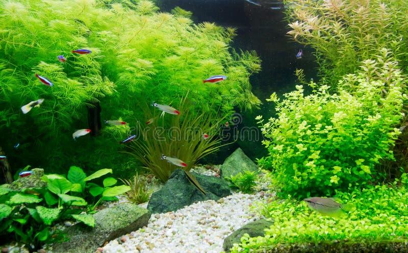 Zoetwateraquarium stock afbeelding afbeelding bestaande for Acquario acqua salata