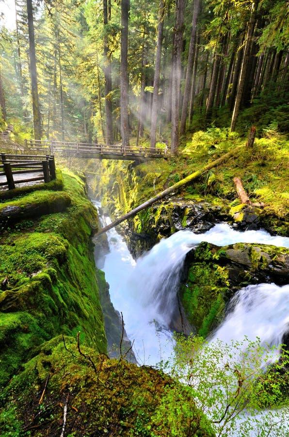 Zol Duc Spada z sunbeams, Olimpijski park narodowy, Waszyngton, usa zdjęcie stock