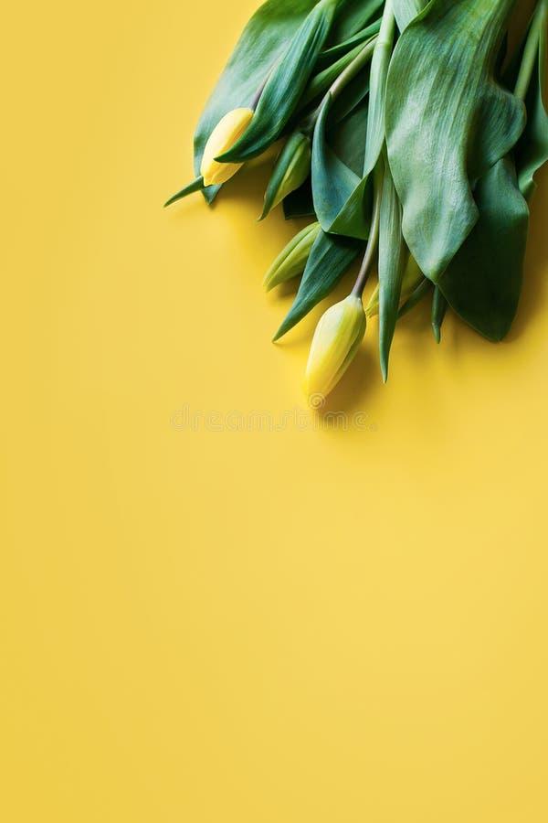 Zombe acima das tulipas amarelas sobre o fundo amarelo foto de stock royalty free