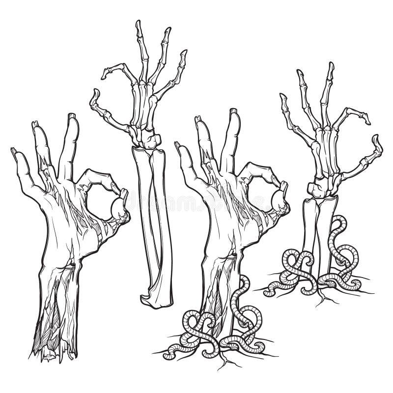 Zombie body language. OK Sign. lifelike depiction of the rotting. Zombie body language. OK Sign. Set of lifelike depicted rotting zombie hands and skeleton hands vector illustration