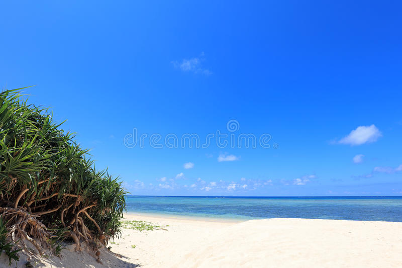Zomer bij het strand stock foto